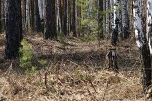 В Запорожской области в лесу нашли полуобнаженное тело пропавшей женщины