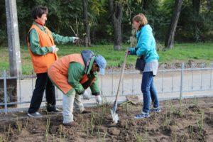 На Аллее в центре Запорожья высадят 4,5 тысячи кустов роз - ФОТО