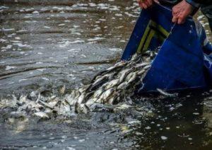 В Каховское водохранилище выпустили более шести тонн мальков рыбы