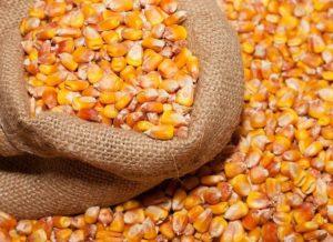 В Запорожской области у пенсионерки украли 300 килограммов кукурузы - ФОТО