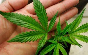 Запорожская область занимает шестое место по уровню наркопреступности