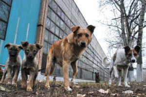 В Запорожье за полгода отловили и стерилизовали тысячу бездомных животных