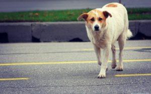 В Запорожье разыскали маршрутчика, который сбил собаку и скрылся с места ДТП - ВИДЕО