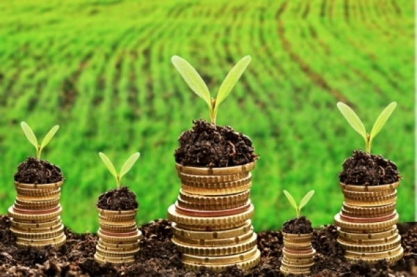 Жители Запорожской области заплатили более миллиарда гривен платы за землю