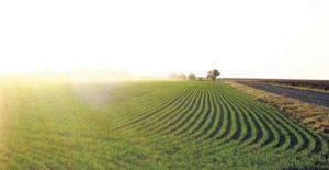 Запорожские аграрии заявили, что область находится в зоне рискованного земледелия