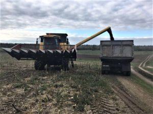 В Запорожской области продали урожай подсолнечника, засеянного на самовольно захваченной земле - ФОТО