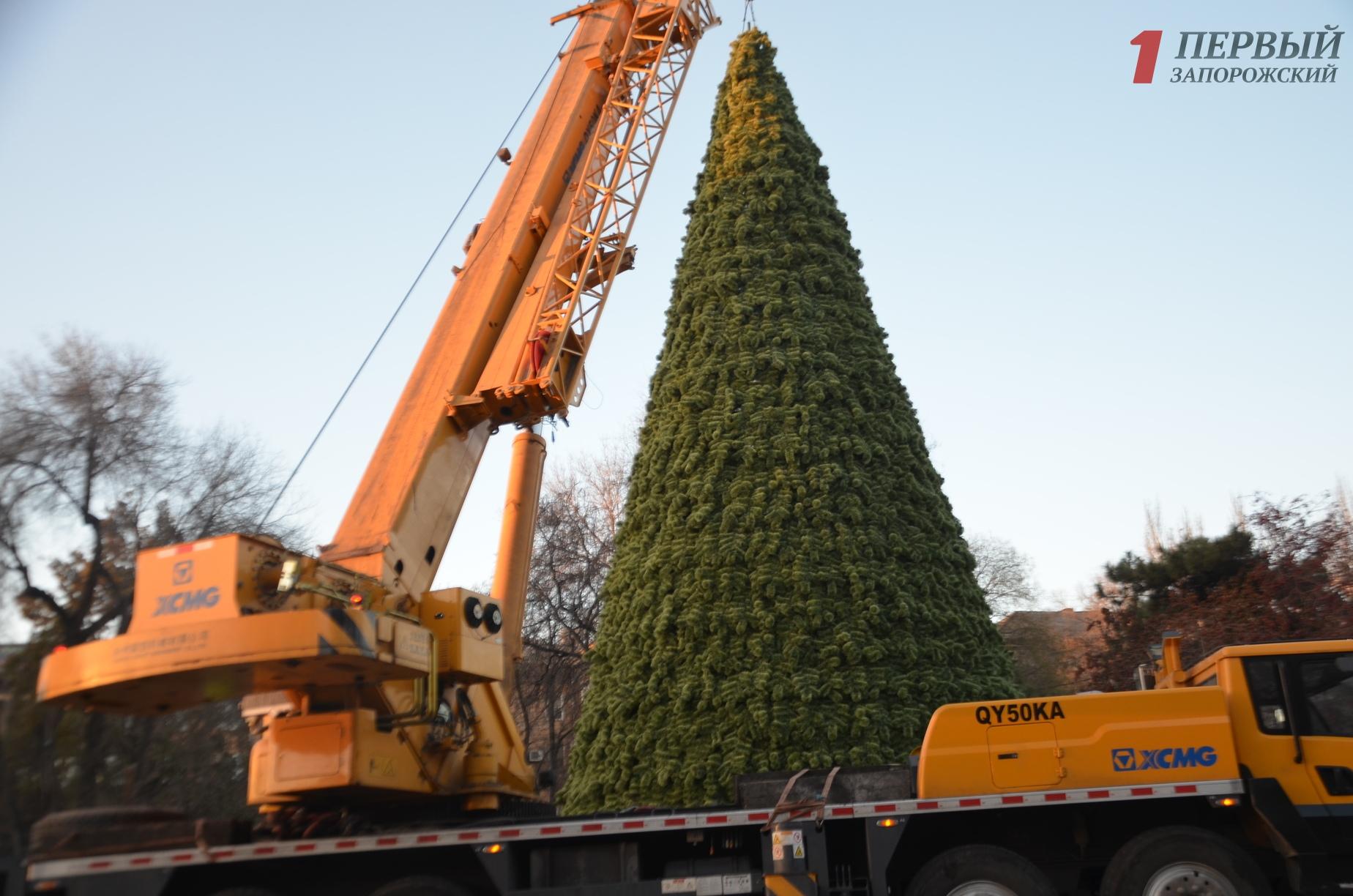 В Запорожье заканчивают монтировать городскую елку на площади Маяковского – ФОТО