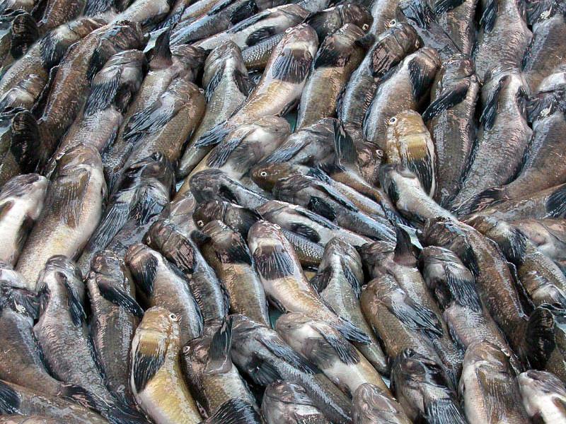 В Запорожской области задержали браконьера с солидным уловом - ФОТО