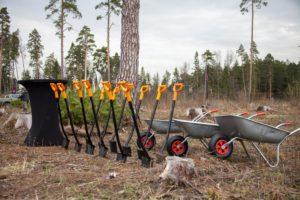 Константин Брыль предложил разнообразить досуг школьников и отправить их высаживать леса
