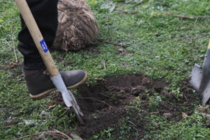 В сквере Яланского полсотни запорожцев посадили новые деревья – ФОТО