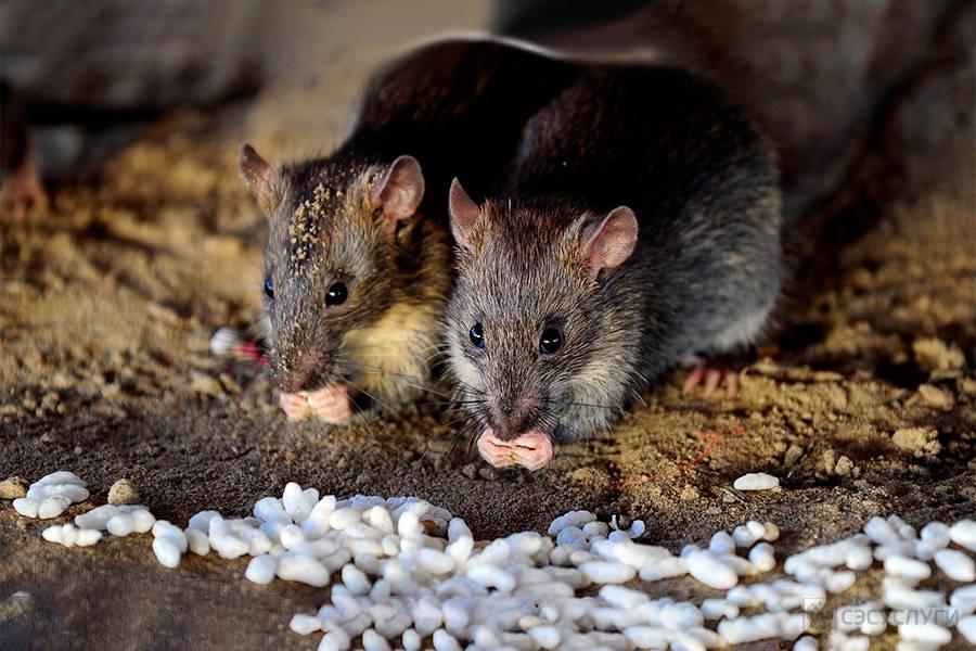 В Запорожье потратят из бюджета более 400 тысяч гривен на борьбу с грызунами и насекомыми