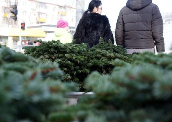 Житель Запорожья спилил елку в городском парке, чтобы донести ее до дому, но был остановлен полицейскими – ФОТО