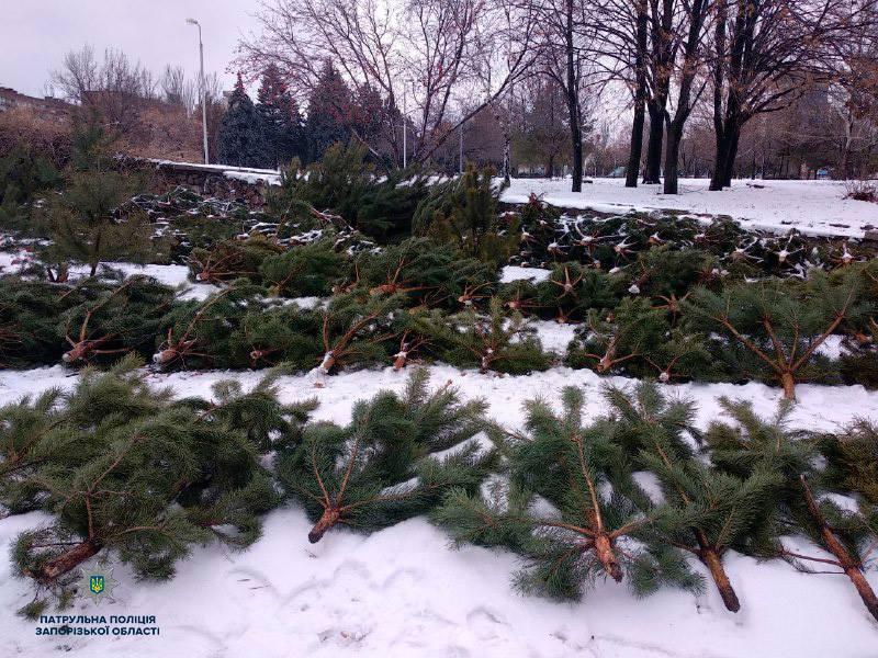 В центре Запорожья коммерсант организовал нелегальную точку продажи елок – ФОТО