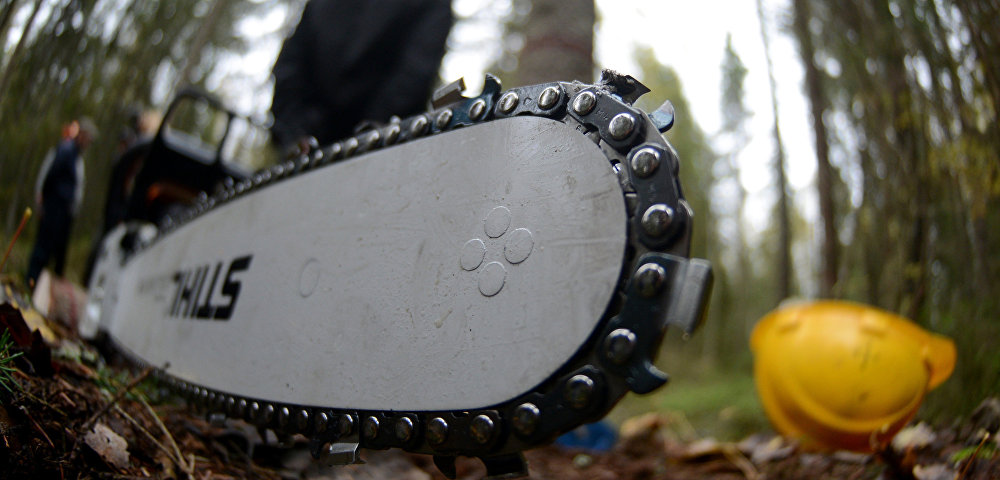 В Запорожском районе поймали «черных» лесорубов - ФОТО