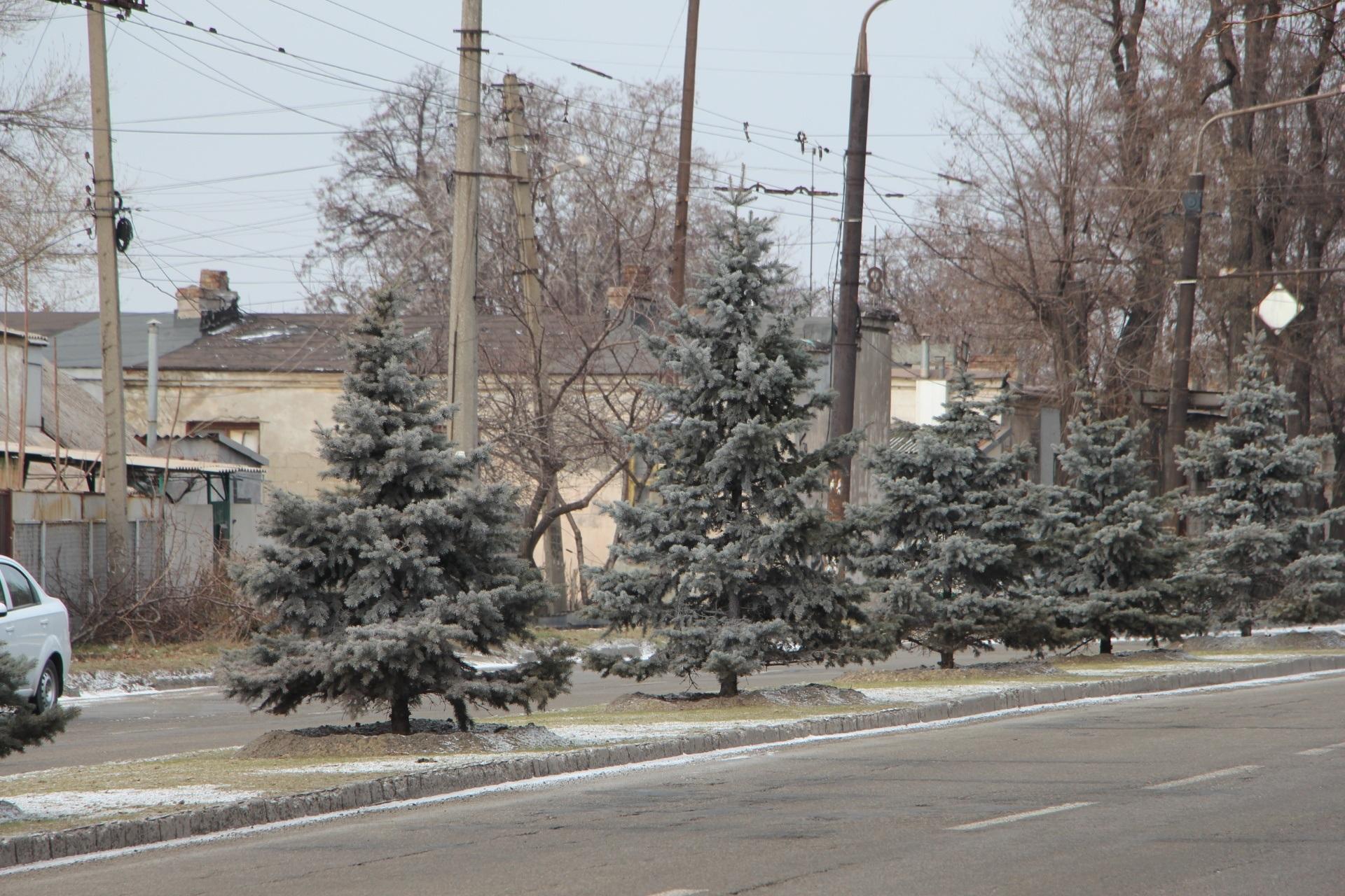 В Запорожье коммунальщики обрабатывают спецраствором елки и сосны - ФОТО