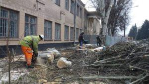 В Александровском районе Запорожья удаляют аварийные деревья