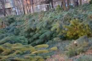 Где и за сколько в Запорожье можно купить елку к Новому году - ФОТО
