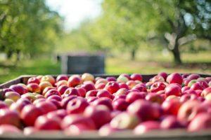 Потерянный груз: под Запорожьем перевернулась фура с полным прицепом яблок - ВИДЕО
