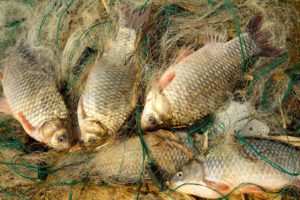 В Запорожском районе поймали браконьера, выловившего 15 килограмм рыбы