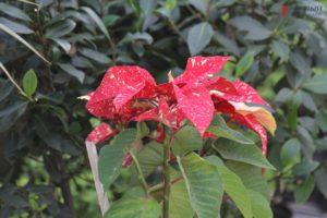 Как в Запорожском ботсаду зимой цветут экзотические растения – ФОТО