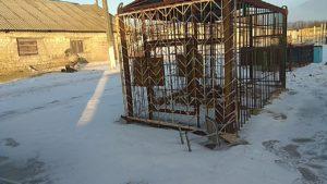 В Васильевский реабилитационный центр доставили последнего льва, вывезенного из частного зоопарка Покровска