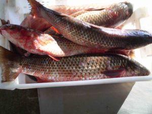 В Запорожской области отправили под суд мужчину, который купил 25 килограмм рыбы без документов
