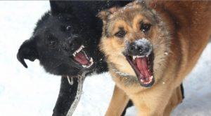 В Запорожье стая собак загнала козла в реку: его вытащили спасатели - ФОТО