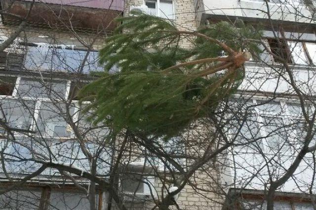Запорожец выбросил елку с балкона многоэтажки - ВИДЕО