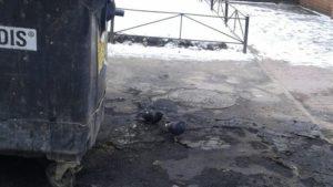 В Запорожье вандалы сожгли одиннадцать мусорных контейнеров
