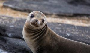 В Америке полицейские спасли тюленя, который запутался вмусоре - ВИДЕО