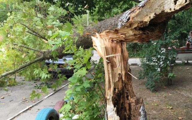 В Запорожье водитель подал в суд на коммунальщиков из-за упавшего дерева