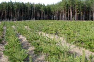 В Запорожской области намерены восстанавливать лес: в этом году высадят 500 гектар