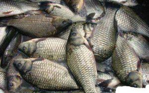 В Запорожской области задержали браконьеров с уловом на 46 тысяч гривен - ФОТО