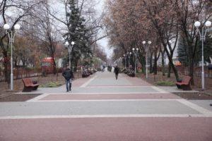 В Запорожье удалят 70 деревьев в рамках четвертой очереди реконструкции проспекта Маяковского