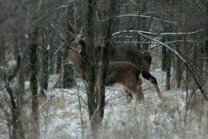 Лисы, олени, птицы и кабаны: запорожский фотограф показал, как живут обитатели заповедника «Хортица» - ФОТО