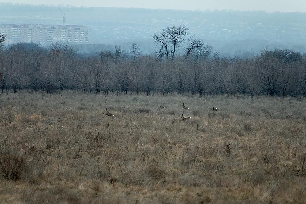 Олени и птицы: запорожский фотограф показал, как живут обитатели заповедника «Хортица» - ФОТО