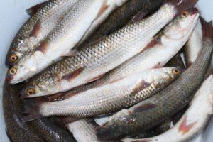 В Запорожской области задержали браконьера с уловом на 60 тысяч гривен - ФОТО