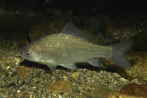 На Каховском водохранилище поймали браконьеров, выловивших более 100 килограммов рыбы - ФОТО