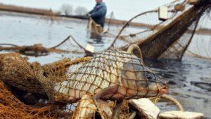 В Запорожской области разоблачили браконьеров, которые незаконно вылавливали рыбу из Каховского водохранилища - ФОТО
