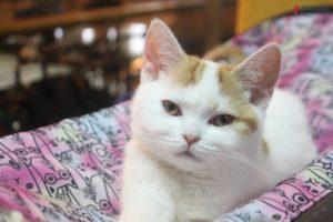 Мейн-куны, бобтейлы и сфинксы: как в Запорожье прошла выставка кошек - ФОТО