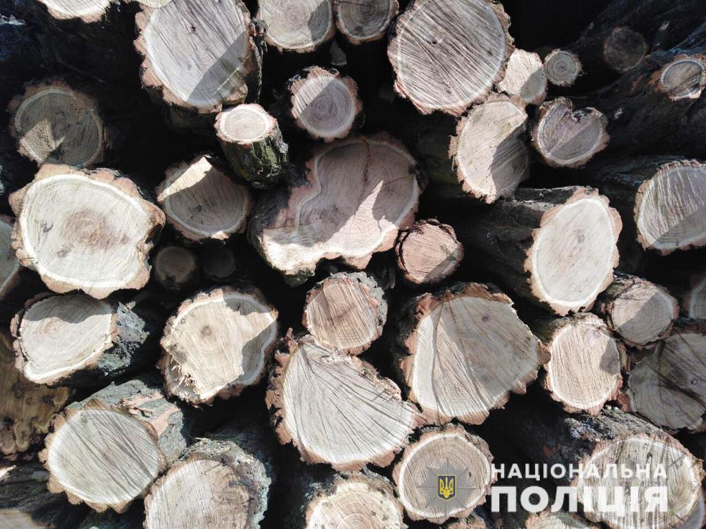 В Запорожской области задержали грузовик с древесиной без документов - ФОТО