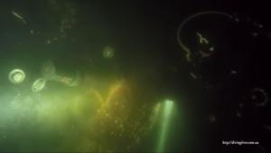 Дайвер из Запорожья вновь продемонстрировал жизнь подводного мира Днепра – ФОТО, ВИДЕО