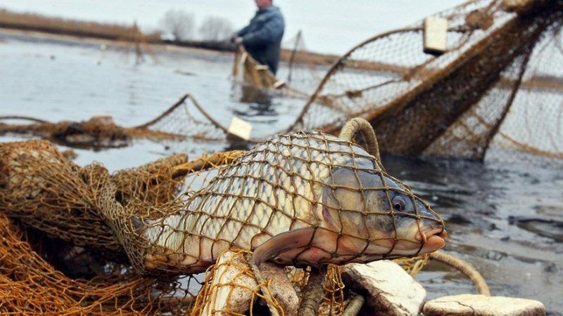 В Запорожской области браконьеры наловили рыбы на 100 тысяч гривен - ФОТО
