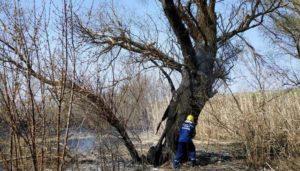 В Запорожской области пожарные спасли из огня выводок белок - ФОТО