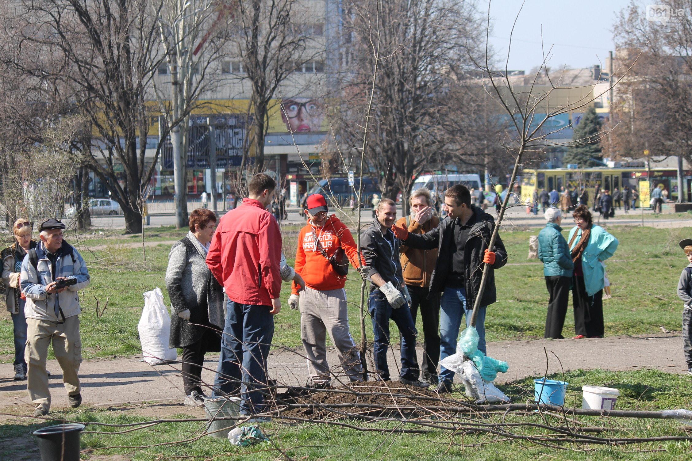 Запорожцы высадили в сквере Яланского дубовую рощу – ФОТО