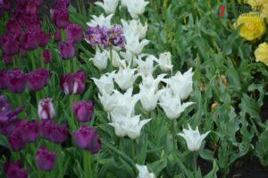 Цветение магнолии, дендрарий и удивительные тюльпаны: что запорожцы могут увидеть в детском ботаническом саду – ФОТО