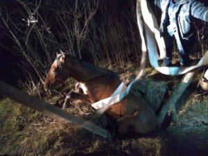 В Запорожской области спасатели вытащили коня, упавшего в колодец - ФОТО
