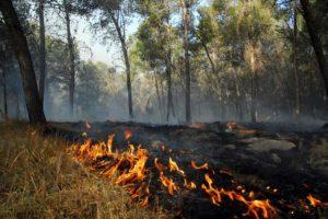Запорожцев предупреждают о высокой пожарной опасности в период майских праздников