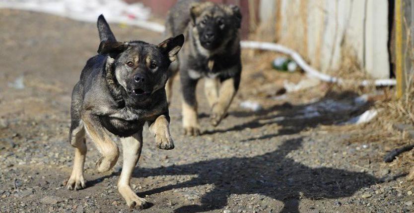 В Запорожской области стая бродячих собак напала на женщину
