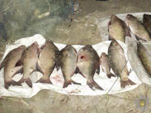 На Каховском водохранилище ночью задержали браконьера - ФОТО